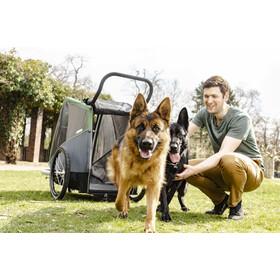 Croozer Dog Bruuno Remolque para perros, pine green